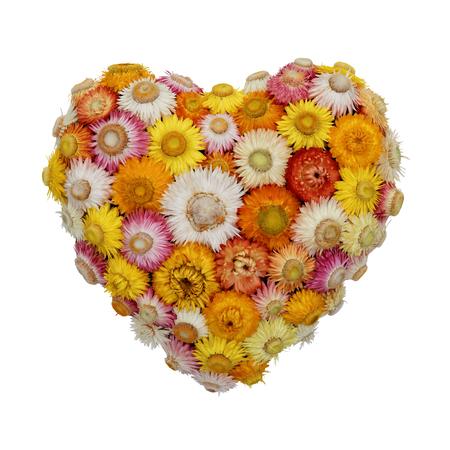 Everlasting Blumen-Herz Standard-Bild - 63374612