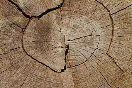 Holz Hintergrund: Verwitterte Oak Tree Querschnitt Nahaufnahme Standard-Bild - 72464708