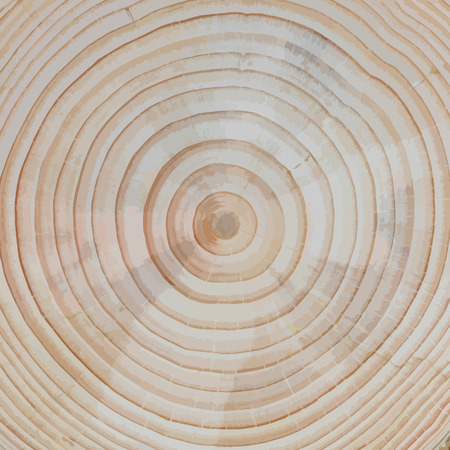 Wood Background: Pine Tree Cross-Section