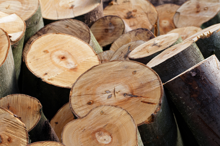 Holzernte: Stapel von frisch geschnittenem Buche Abschnitte Standard-Bild - 73025348