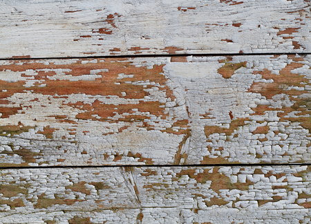 Wooden Background Texture with White Coating Weathering