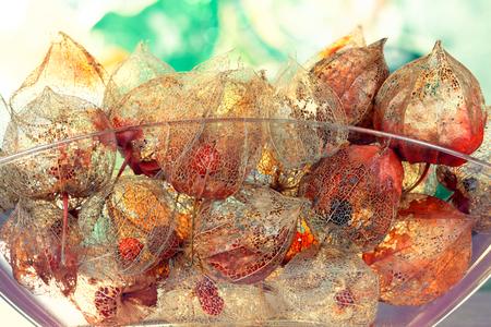Herbstliches Konzept mit lucent Kelchblättern von Physalis alkekengi Standard-Bild - 90547655