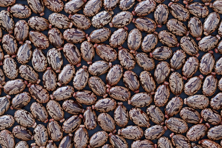 Seeds of Castor Bean (Ricinus communis) - background Standard-Bild