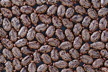 Castor Beans (Ricinus communis) - Natural Concept Standard-Bild