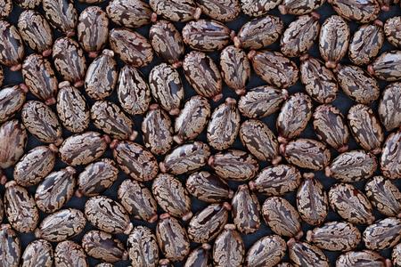 Castor beans (Ricinus communis) - closeup view Standard-Bild - 116007472