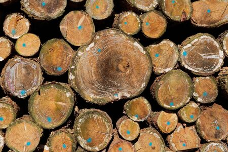 Wooden Background: Pile of Softwood Tree Trunks Closeup View Standard-Bild