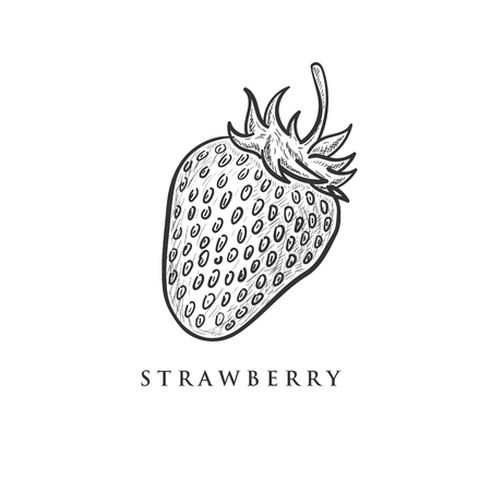 Hand drawn strawberry vector illustration. Isolated elements for design Ilustrace