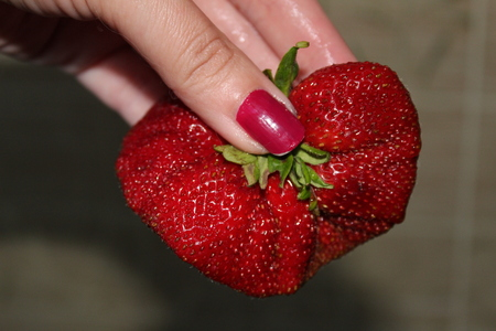 Fresh ripe strawberry in human hand.
