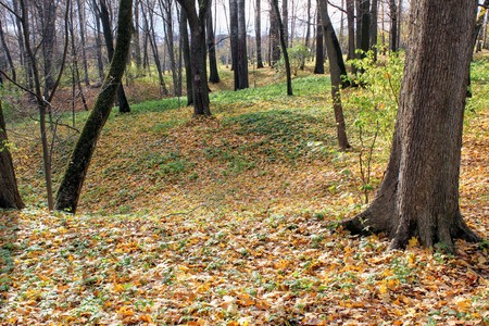 Fallen yellow leaves in the park in the estate of Count Leo Tolstoy in Yasnaya Polyana.