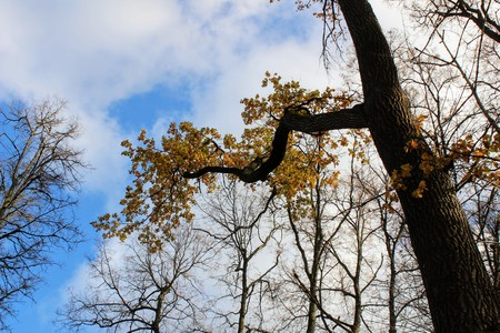 Branch of a tree with yellow leaves in the park in the estate of Count Leo Tolstoy in Yasnaya Polyana. Stock fotó