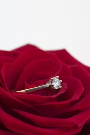 Red rose with engagement ring, closeup photo