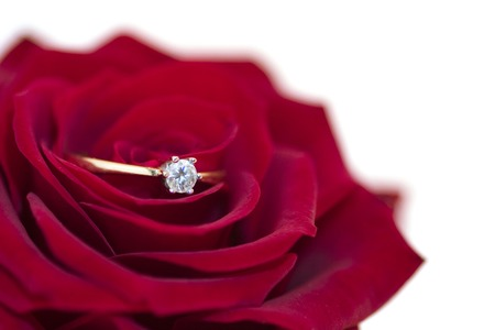 Red rose with engagment ring, closup photo