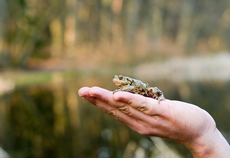 Kiss me (frog on a human palm) photo
