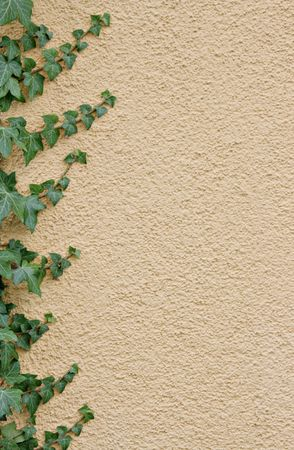 Ivy border on an apricot-colored concealed wall