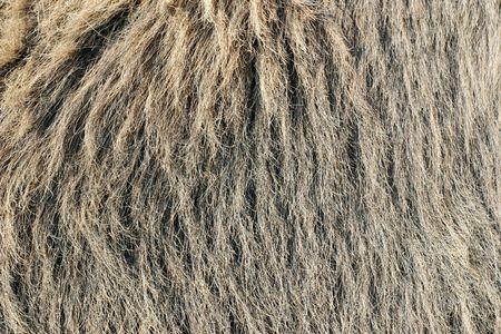 comfy: Fur background in grey tones