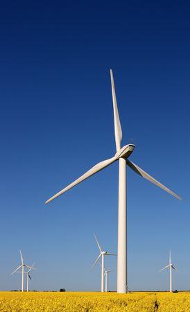 Wind turbines in a rape field photo