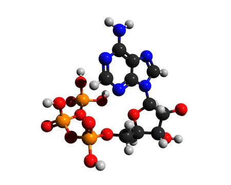Molecular structure of adenosine triphosphate (ATP), a complex organic chemical, 3D rendering