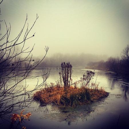 Clear island in pond on a foggy day