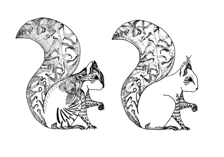 a hand-drawn sketch of the squirrel in summer and winter coat Vector