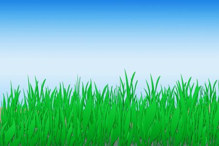 Green grass with blue sky background illustration. Stock Photo