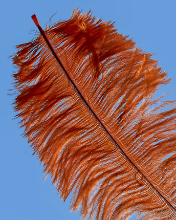orange feather on blue background