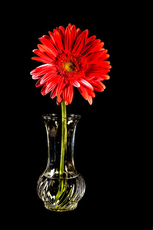 red flower in vase 1 on black background Banco de Imagens