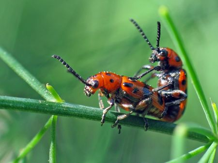 continuation: Beetles love