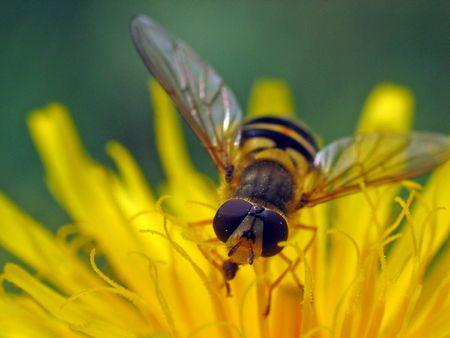 botanist: Fly