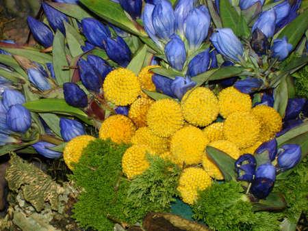 Blue and Yellow Garden Banco de Imagens