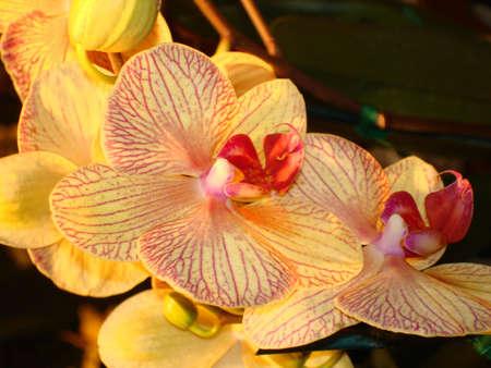 Backlit Orchid Imagens