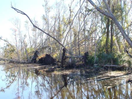 bayou swamp: Swamp  Bayou Hurricane Katrina damage Stock Photo