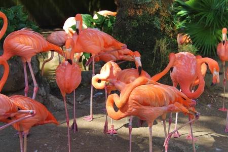 Flamingo Banco de Imagens