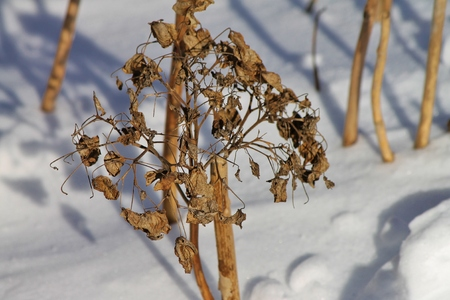 dried flowers in the snow Stock Photo