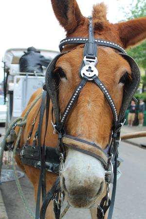 reins: Mule