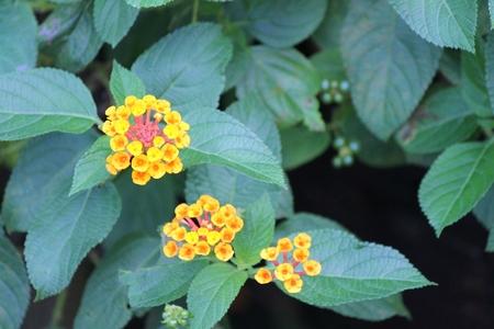Petite Flowers Stock Photo