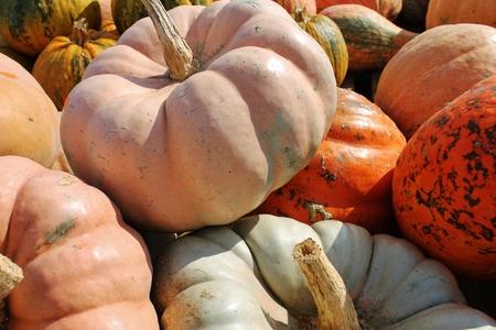 Various pumpkins Stock Photo