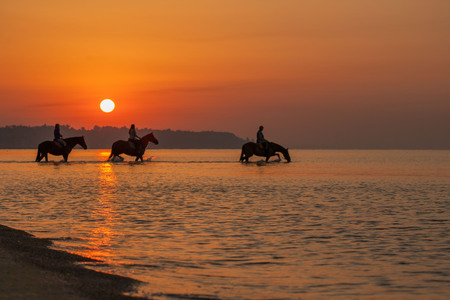 shire horse: Horses bathe in the sea at dawn. Background of the beautiful sky and sunrise.