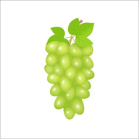 Illustration of green grapes branch Vector