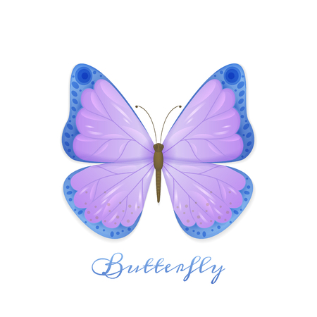 Vector illustration of butterfly with violet and blue wings on white background with shadow and text