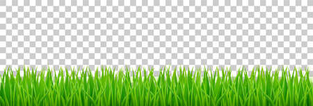 Green grass on spring lawn or field