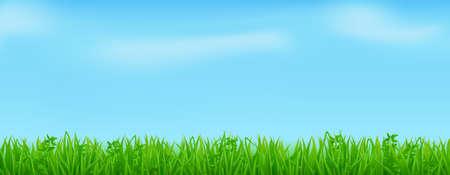 Green grass on spring lawn or field Vector Illustratie