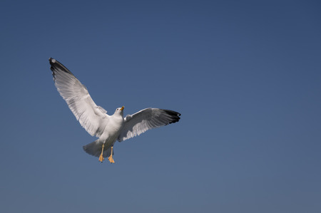 Seagull at Warnem?nde Baltic Sea Germany Stock Photo