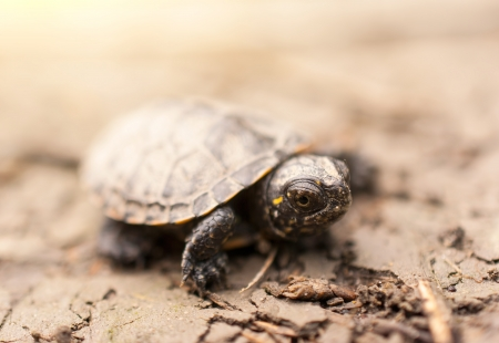 Baby Turtle Banque d'images