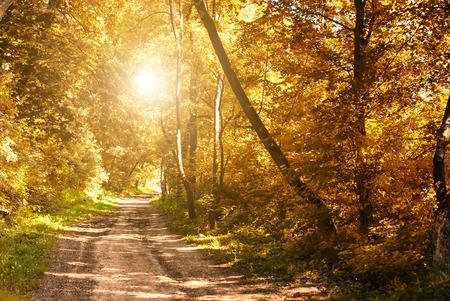 autumn sky: Autumn fores road