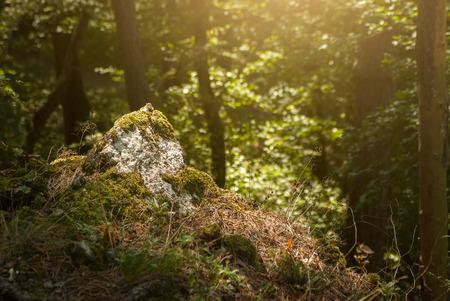 no pase: Bosque