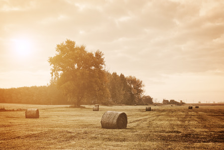 agricultural farm land: Bales on the field