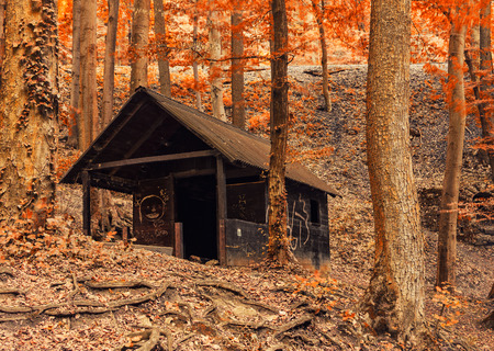 Shelter on the forest photo