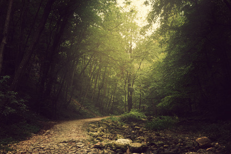 Percorso via nella foresta