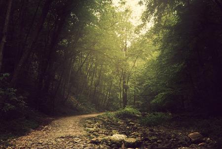Weg pad in het bos Stockfoto