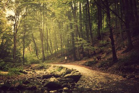 Wegweg in het bos Stockfoto